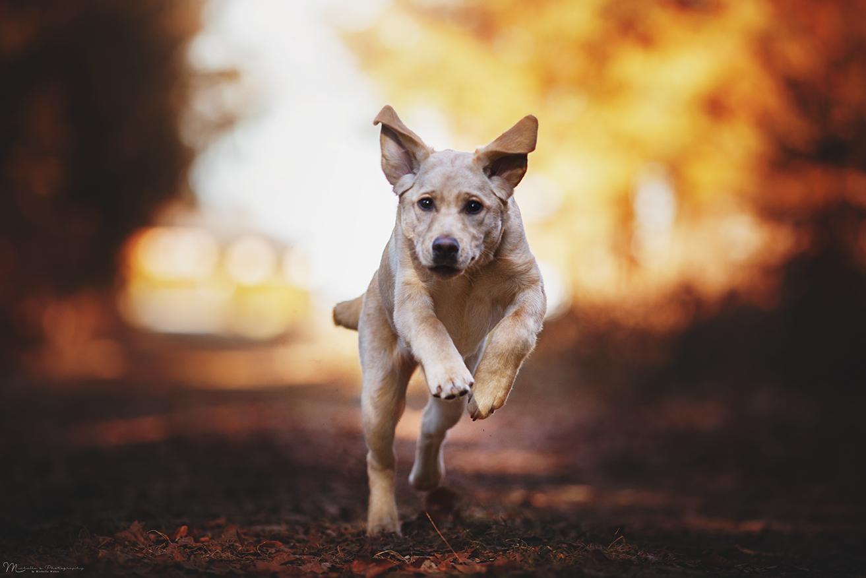 Hotelhund Luna Action