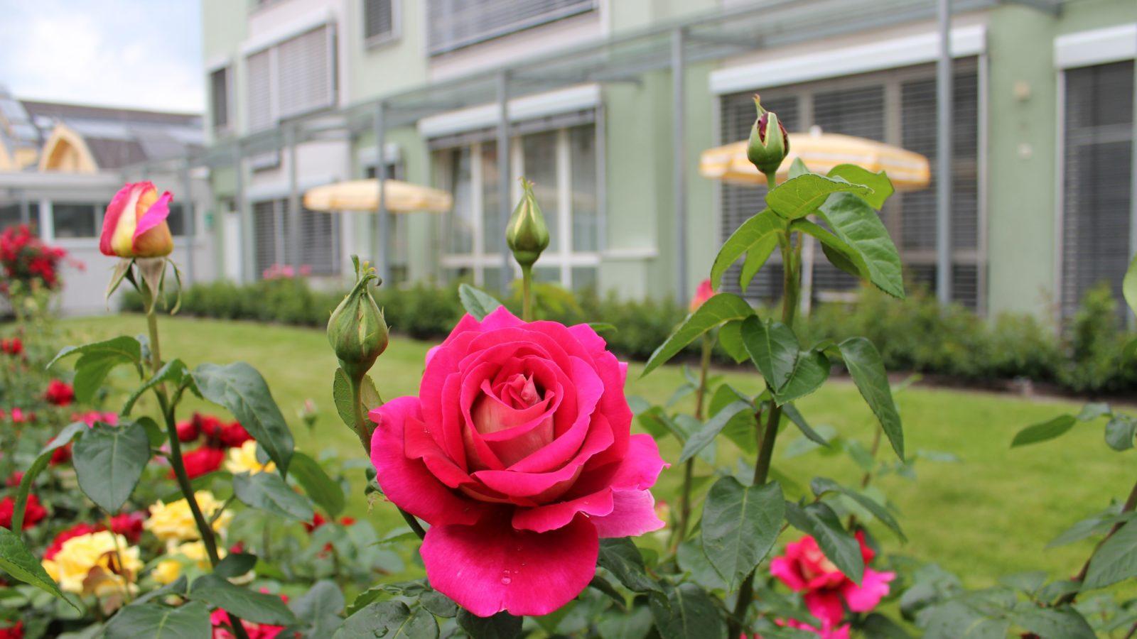 Rosengarten Hotel Gollner