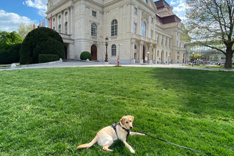 Hundehotel hundefreundlich Graz Oper
